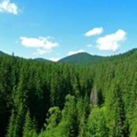 Forest for sale in Maramures county 3000 - 16000 hectares